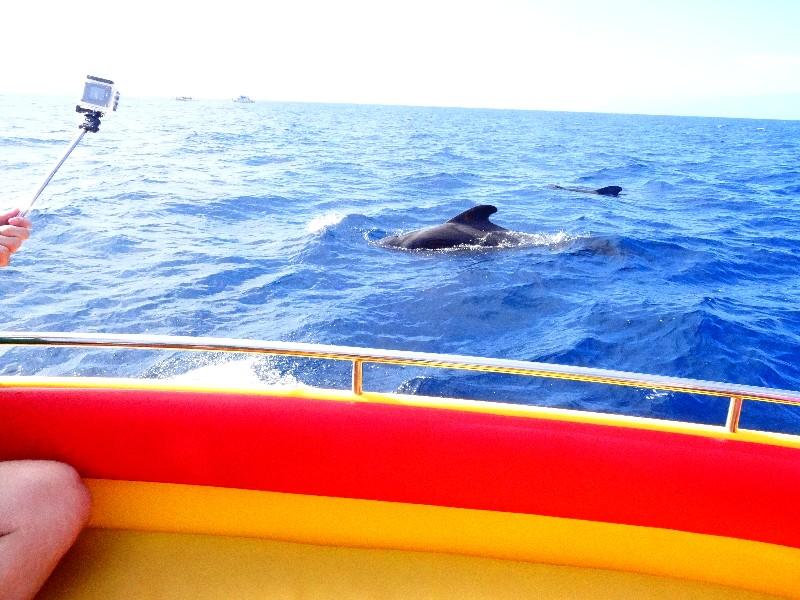 Wale neben dem Boot